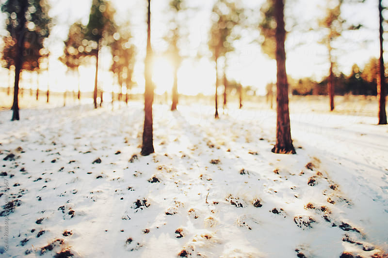 Snowy Tilt-Shifted Forest by Kevin Russ for Stocksy United