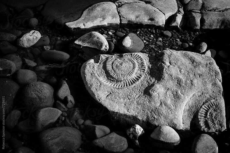 Large broken rock ammonite fossil lying on beach by Rebecca Spencer for Stocksy United