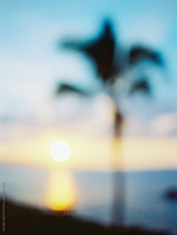 blurred palm tree against blue and yellow sunset sky by wendy laurel for Stocksy United