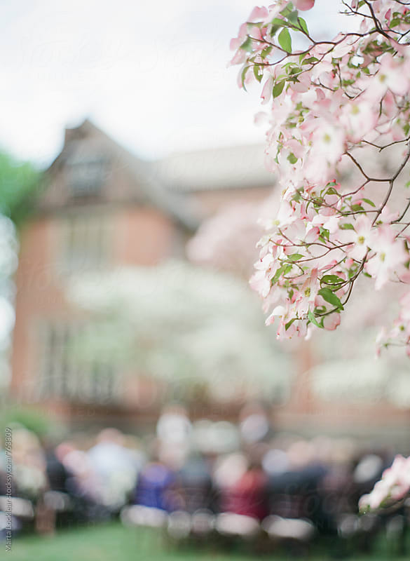 Dogwood flowers with blurred wedding ceremony in background by Marta Locklear for Stocksy United