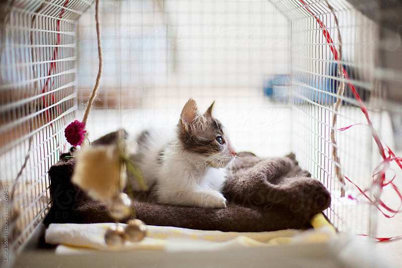 Recovering kitty cat  by Laura Stolfi for Stocksy United
