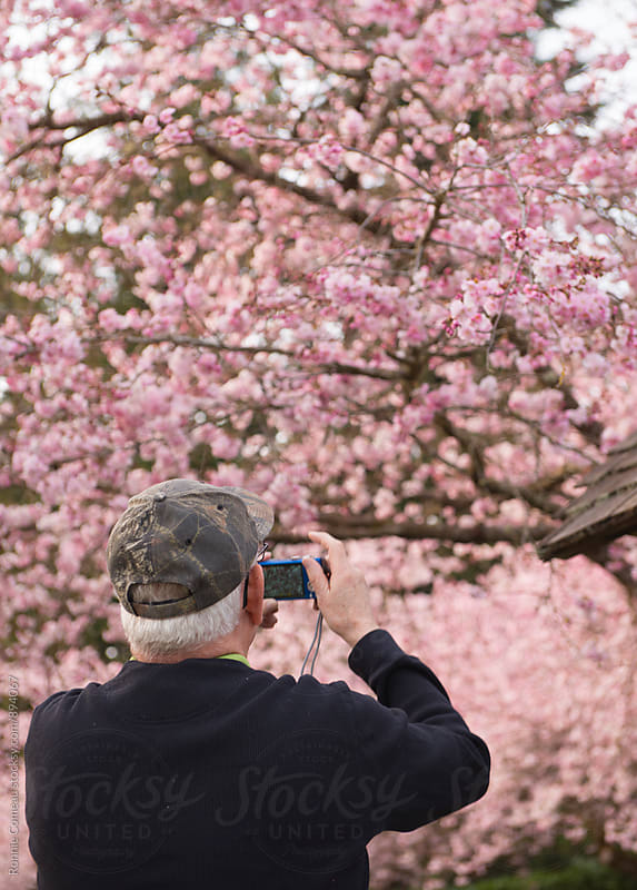 Senior Man Taking Pictures Of Spring Cherry Blossoms by Ronnie Comeau for Stocksy United