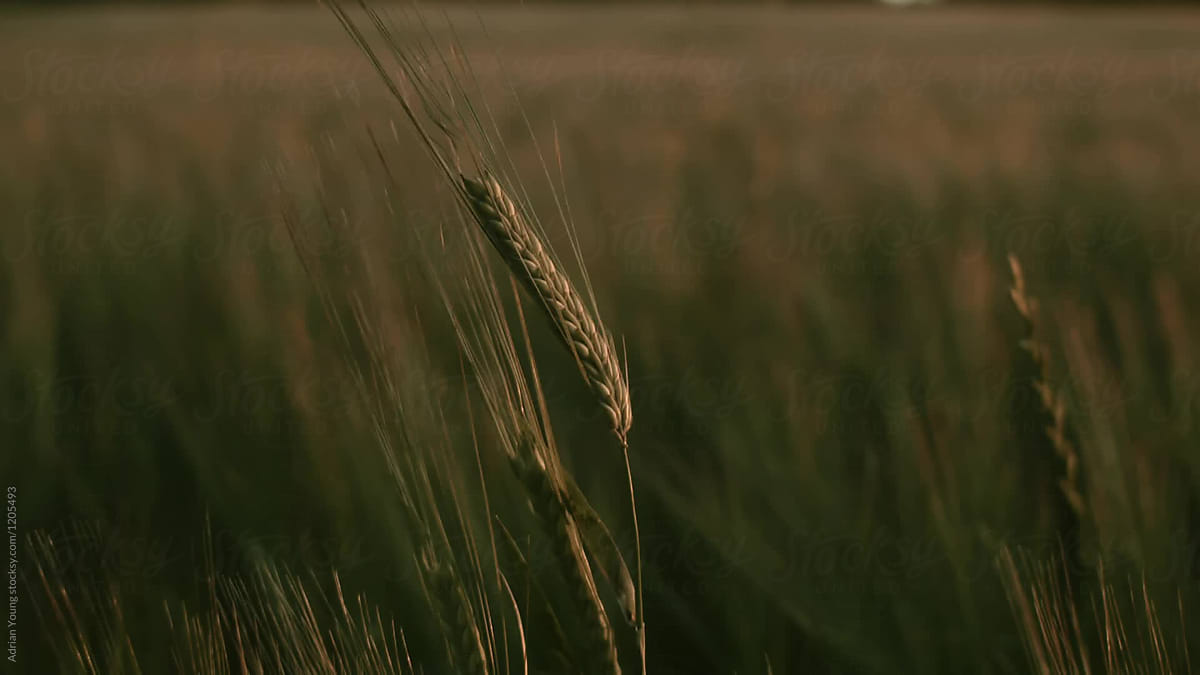 Farming and Agriculture Stock Photos and Footage