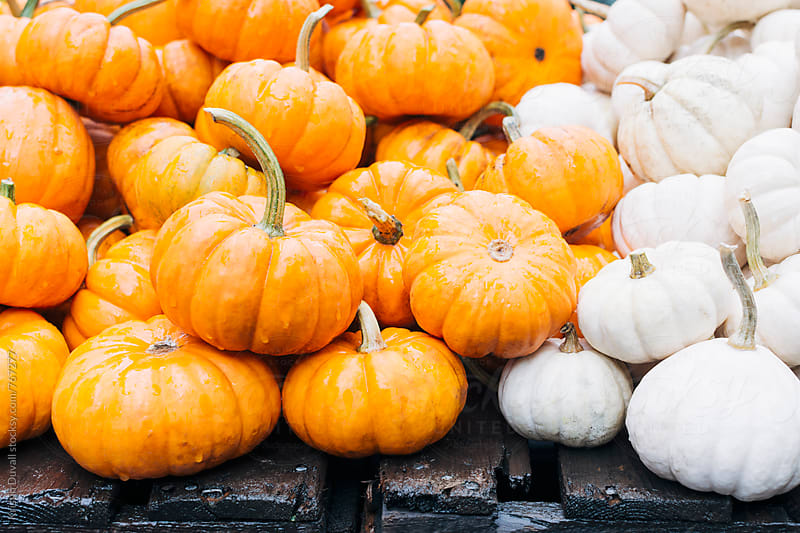 Piles of pumpkins by Kristin Duvall for Stocksy United