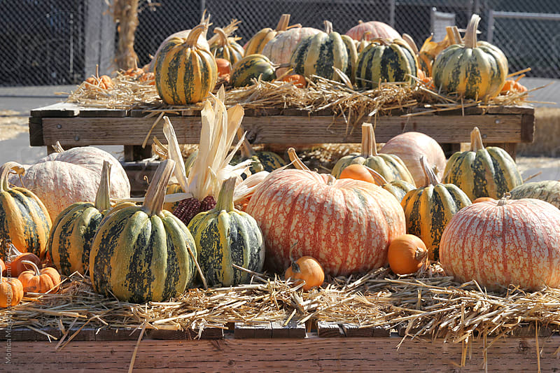 Decorative pumpkins on table display by Monica Murphy for Stocksy United