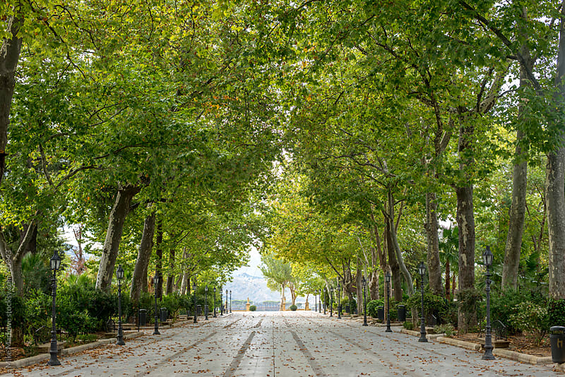 Wide avenue with trees on each side forming a shaded tunnel. by Mike Marlowe for Stocksy United