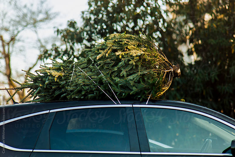 Christmas Tree on the car by Cameron Whitman for Stocksy United