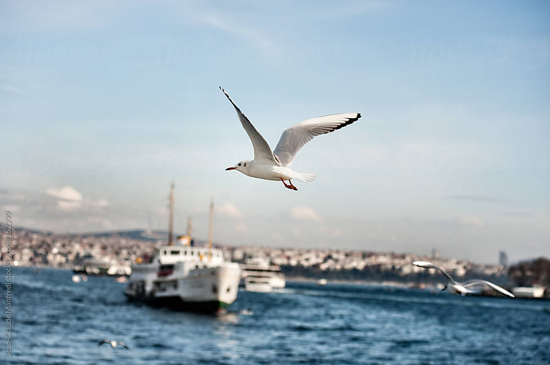 Seagull flies on Bosphorus sea in Istanbul by Jean-Claude Manfredi for Stocksy United
