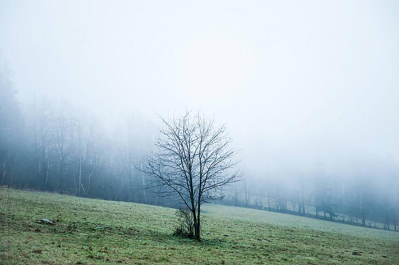 Lonely tree by Jara Sijka for Stocksy United