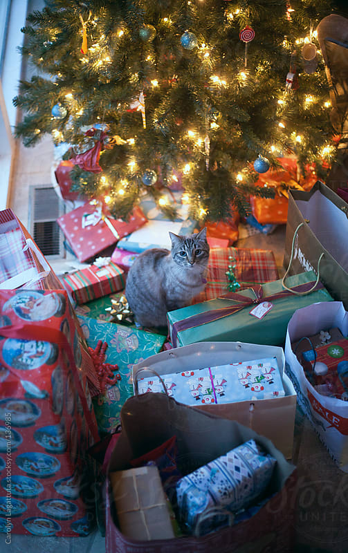 Siamese cat in the middle of many Christmas presents by the tree by Carolyn Lagattuta for Stocksy United