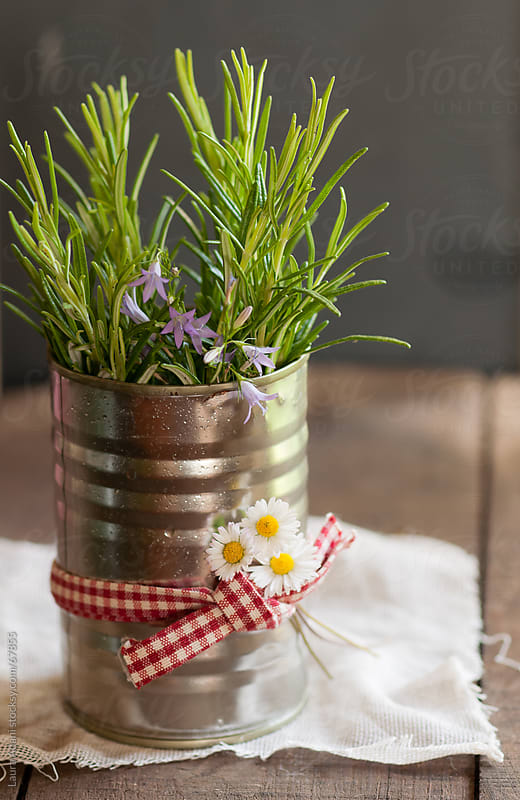 a tin can with rosemary sprigs by Laura Adani for Stocksy United