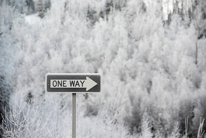 one way sign in winter, frosty by Tara Romasanta for Stocksy United