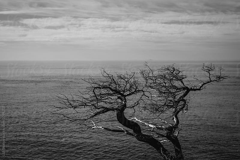 Dead tree by the ocean by L&S Studios for Stocksy United