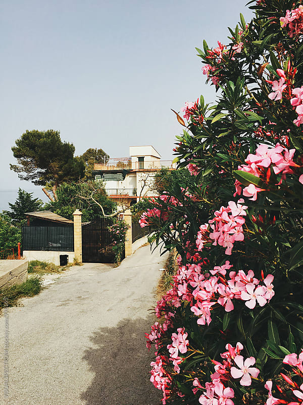 Blooming Flowers and Mediterranean Seaside House in Sicily Italy by Julien L. Balmer for Stocksy United