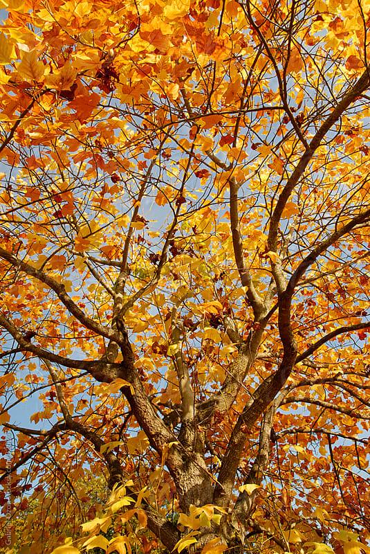 Autumn by Gabriel Ozon for Stocksy United