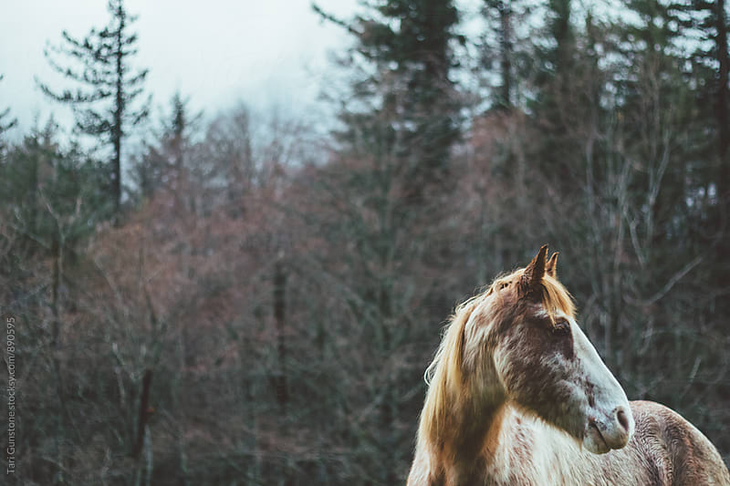 Beautiful horse in forest by Tari Gunstone for Stocksy United