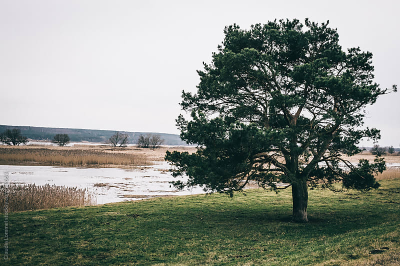 A Single Tree in Front of a River Landscape by Claudia Lommel for Stocksy United
