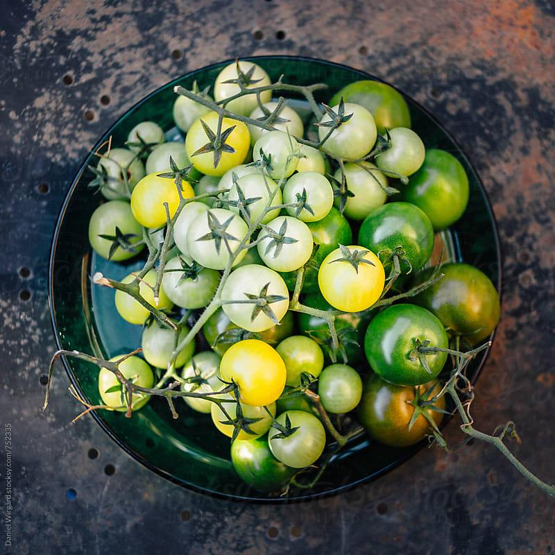 Green tomatoes by Daniel Wirgård for Stocksy United