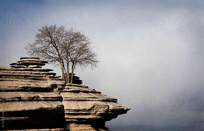 Lonely tree on a rock by ACALU Studio for Stocksy United