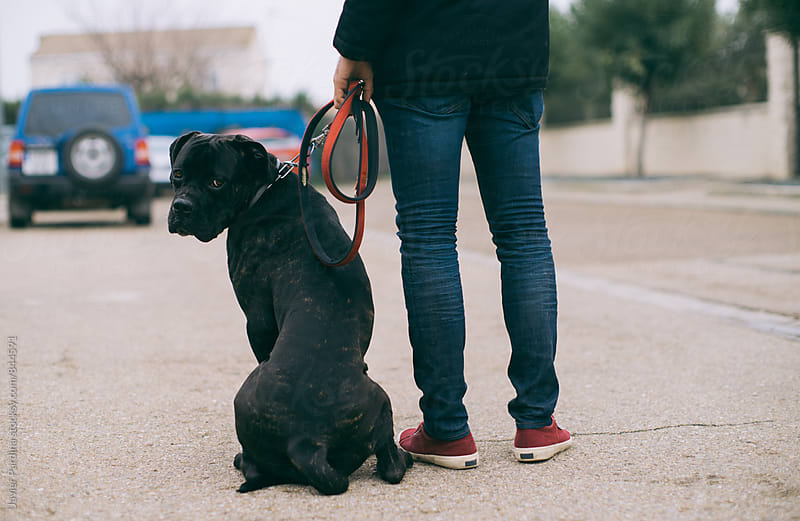 man playing with dog by Javier Pardina for Stocksy United