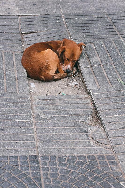 Stray dog abandoned sleeping on the street by Alejandro Moreno de Carlos for Stocksy United