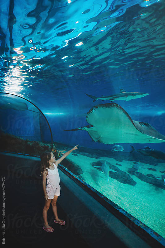 Young girl pointing at sting ray in aquarium tank by Rob and Julia Campbell for Stocksy United