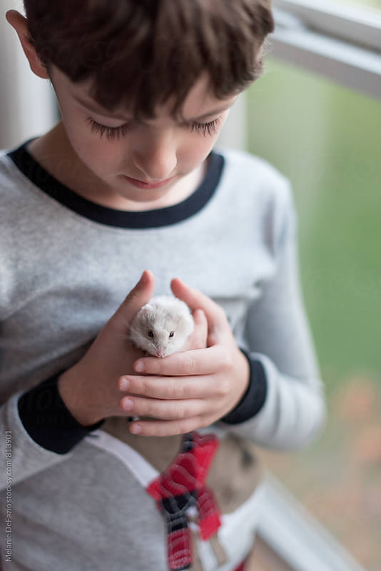 hamster by Melanie DeFazio for Stocksy United
