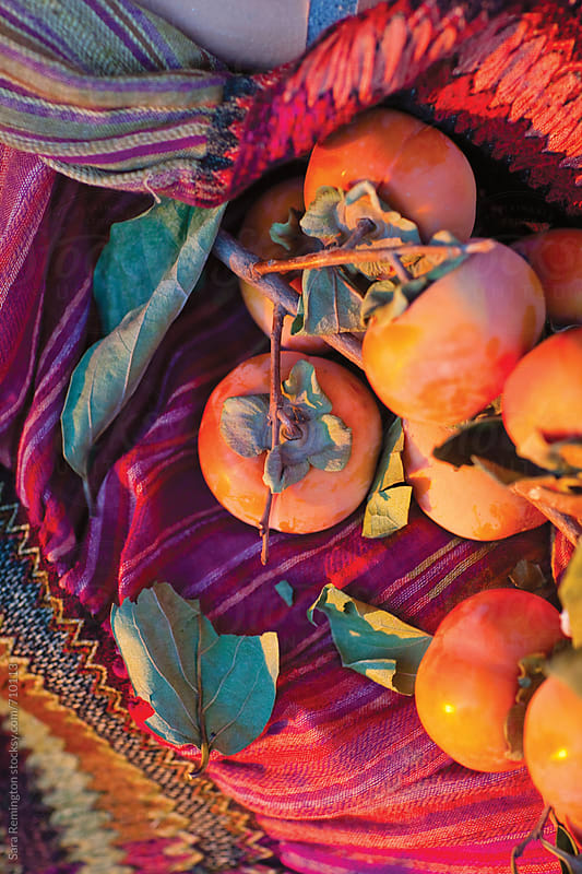 Persimmons at Sunset by Sara Remington for Stocksy United