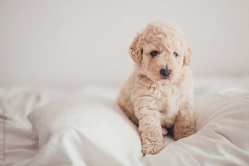 Puppy. by Studio Firma for Stocksy United