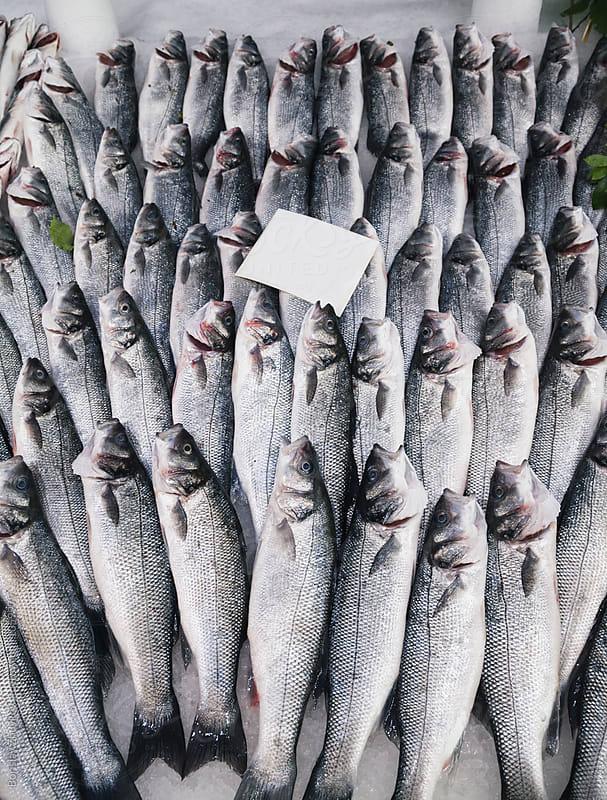 Fresh fish sea bass at the fish market by Borislav Zhuykov for Stocksy United