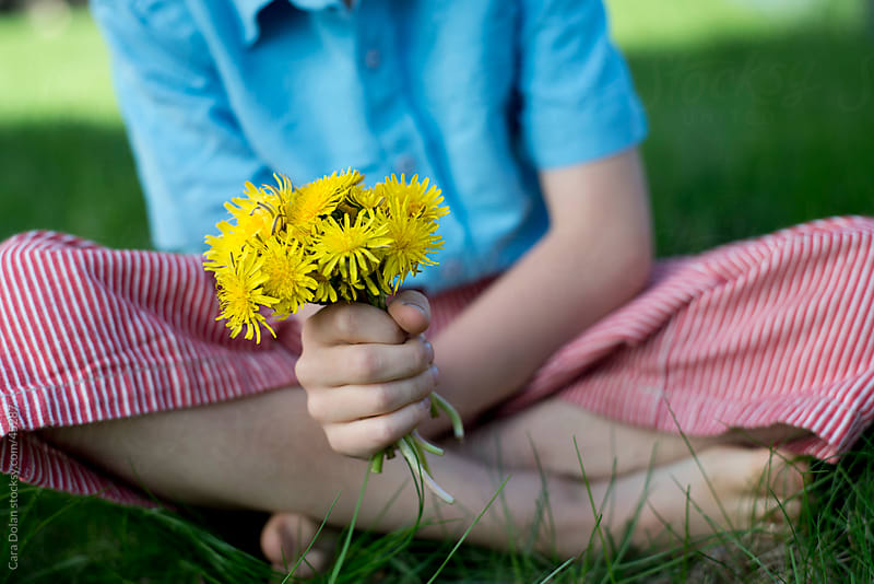 Child holds bouquet of dandelion flowers while sitting in grass by Cara Dolan for Stocksy United