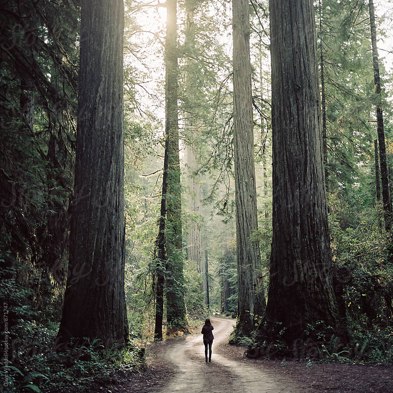 Person standing alone among Redwood trees by Dave Waddell for Stocksy United