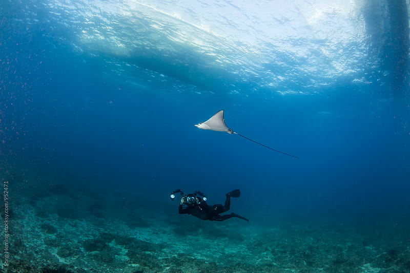 underwater photographer with eagle ray by Song Heming for Stocksy United