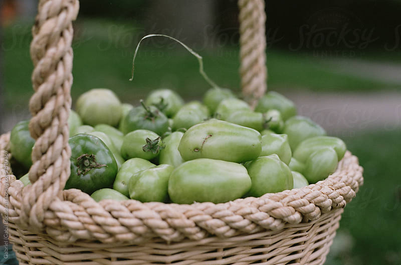 Green tomatoes in a basket by Gabriel (Gabi) Bucataru for Stocksy United