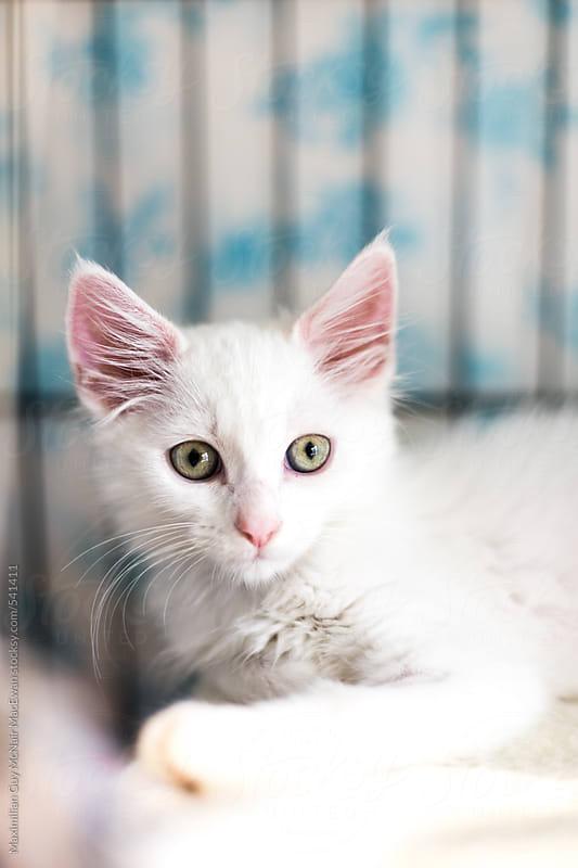 Cute Kittens by Maximilian Guy McNair MacEwan for Stocksy United