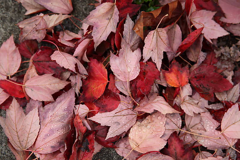 Fall Seasonal Leaves On The Ground by Carey Haider for Stocksy United