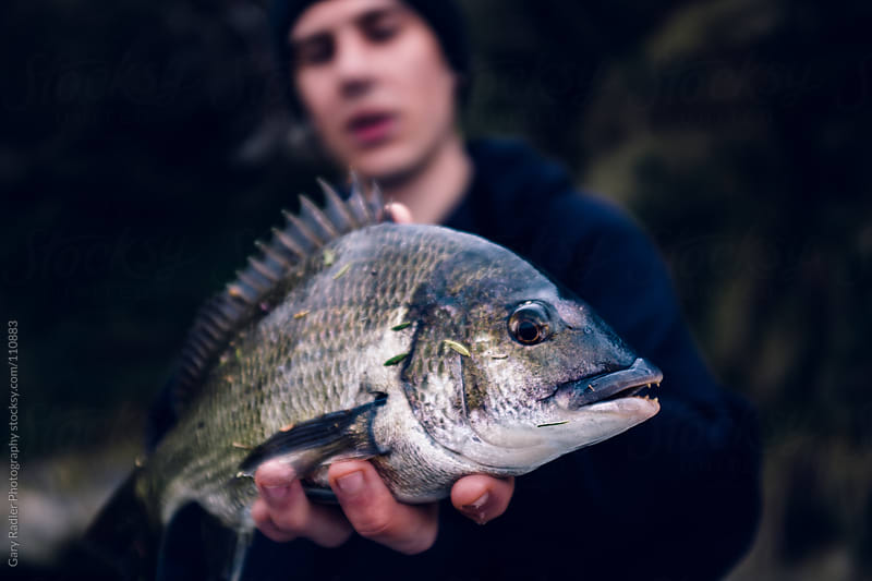 Young man holding a black bream (Acanthopagrus butcheri) by Gary Radler Photography for Stocksy United