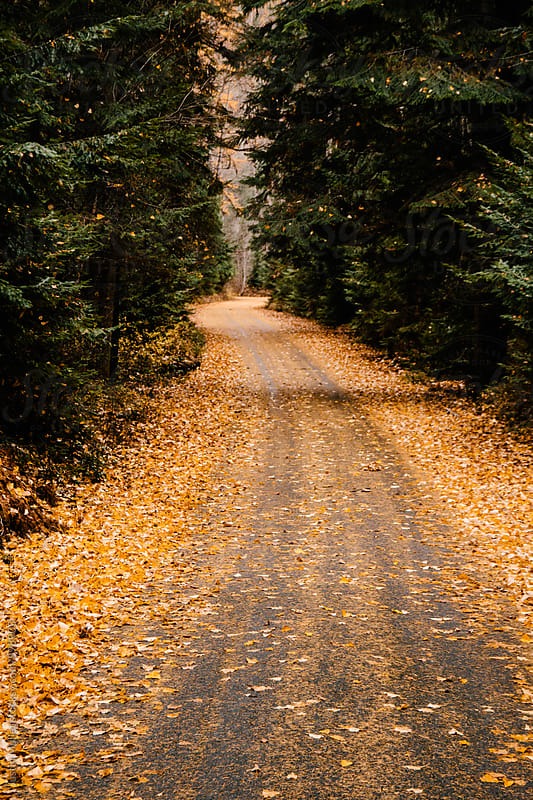 Orange and yellow leaves covering a narrow road in the woods by Justin Mullet for Stocksy United