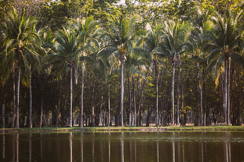 Row of palm trees by michela ravasio for Stocksy United