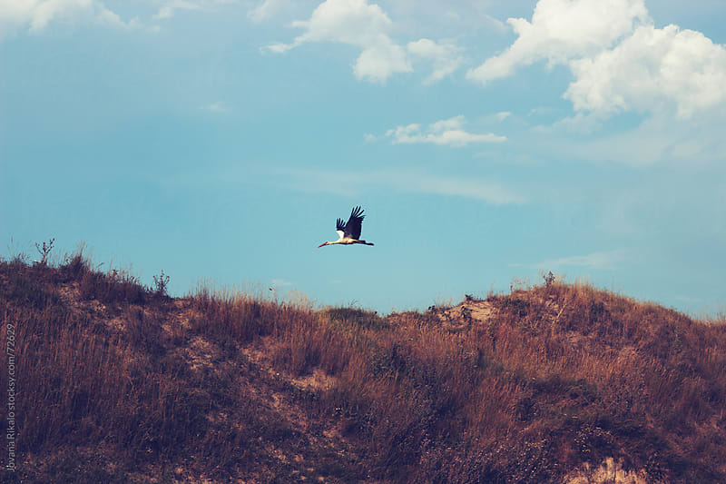 Stork in the air by Jovana Rikalo for Stocksy United