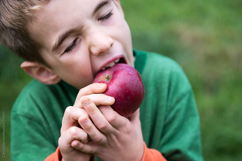 Boy takes an enormous bite of a fresh apple he just picked in an orchard by Cara Dolan for Stocksy United