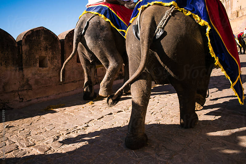 Decorated elephant descend from Amber Fort in Jaipur, Rajasthan, India. by Gabriel Diaz for Stocksy United