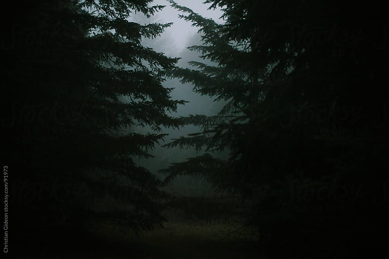 Foggy Evergreens by Christian Gideon for Stocksy United