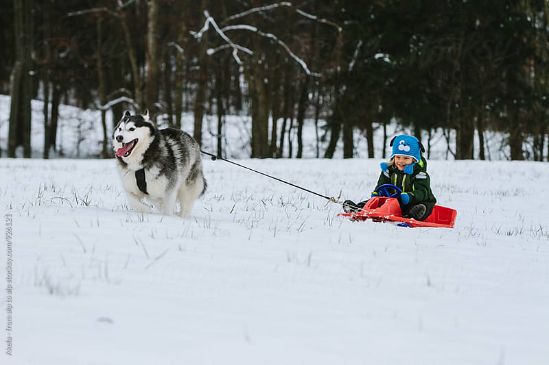 toddler riding a bobsleigh pulled by a husky  by Leander Nardin for Stocksy United