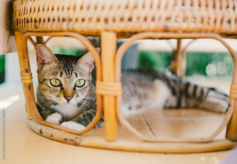 Cute kitten hiding under the wooden table by Jovo Jovanovic for Stocksy United