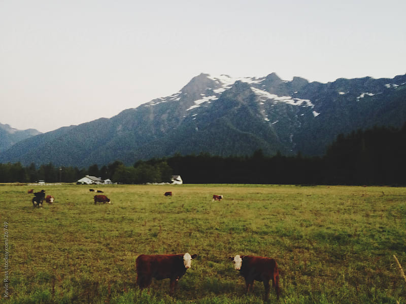 Mountain Cow Farm by Kevin Russ for Stocksy United