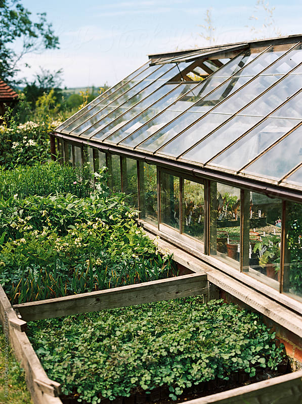 Greenhouse with plants growing outside by Kirstin Mckee for Stocksy United