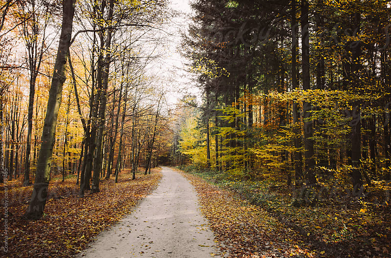 Road trough forest in autumn with yellow leaves by Cosma Andrei for Stocksy United