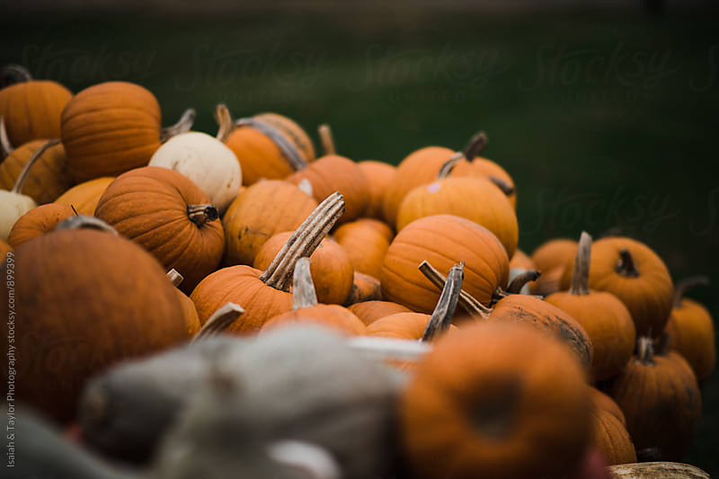 Pile of pumpkins by Isaiah & Taylor Photography for Stocksy United