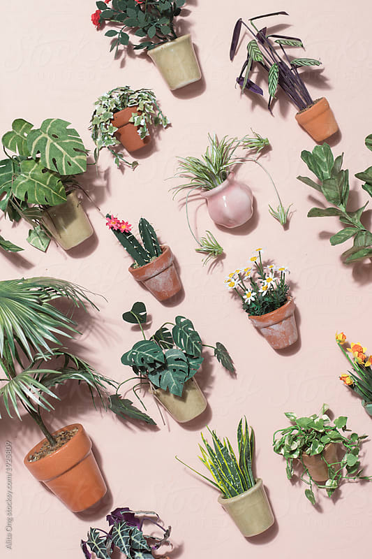 Miniature potted plants by Alita Ong for Stocksy United